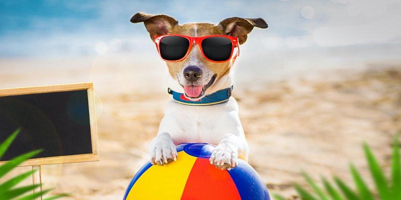 Dog Days of Summer Pet Adoption Event Taste of Doral